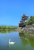 新緑の松本城天守閣と内堀に白鳥