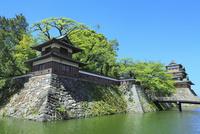 新緑の高島城(諏訪の浮城) 天守閣と角櫓に冠木橋