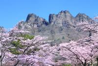 桜咲く妙義山さくらの里