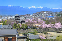 松本城と桜に北アルプス(常念岳)眺望
