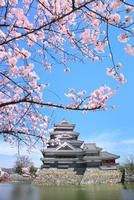 松本城天守閣と内堀に桜