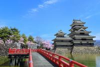 松本城天守閣に桜と内堀の狸橋