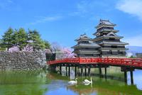 松本城天守閣と内堀の狸橋に白鳥