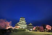 松本城天守閣と夜桜ライトアップ