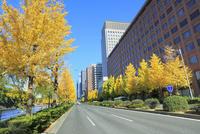 丸の内ビル群とイチョウ並木の紅葉に国道1号線(日比谷通リ)