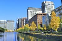 丸の内ビル群とイチョウ並木の紅葉に和田倉濠