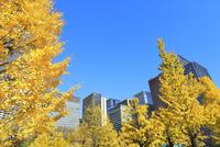 丸の内ビル群とイチョウ並木の紅葉