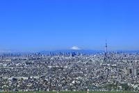 スカイツリーと都心のビル群に富士山遠望