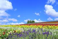 かんのファーム 花畑(サルビア,キンギョソウ)と樹林