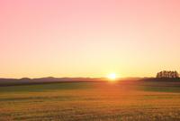 美瑛 丘と夕日 11076032329| 写真素材・ストックフォト・画像・イラスト素材|アマナイメージズ