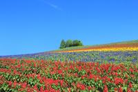 かんのファーム 花畑(サルビア)と樹林