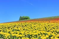 かんのファーム 花畑(マリーゴールド)と樹林