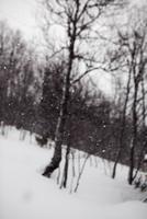 Forest in winter 11077003125| 写真素材・ストックフォト・画像・イラスト素材|アマナイメージズ