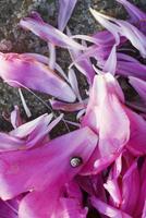 Snail on pink flower petals