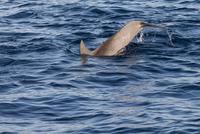 Dorsal fin of dolphin swimming in sea