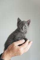 Kitten sitting on hands