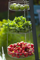 Fruits and mint in hanging baskets in garden