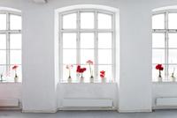Amaryllis flowers on windowsill 11077009014| 写真素材・ストックフォト・画像・イラスト素材|アマナイメージズ