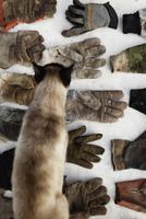 Cat walking on various gardening gloves