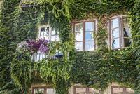 Overgrown facade of building