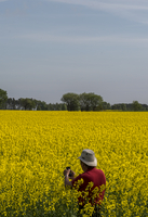 Man taking picture on oilseed rape field