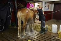 Teenage girl washing horse