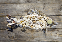 Fish made out of shells