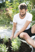 Man planting lavender in garden