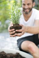 Mid adult man planting lavender plant 11077012091| 写真素材・ストックフォト・画像・イラスト素材|アマナイメージズ