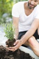 Mid adult man planting lavender plant