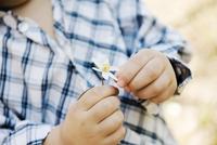 Boys hands holding flower