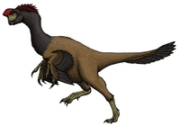 Citipati, an oviraptorid from the Cretaceous Period.