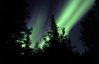 Aurora borealis above the trees, Northwest Territories, Cana