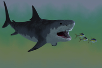Several Tuna fish try to escape from a huge Megalodon shark.