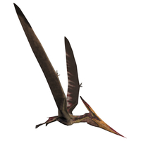 Pteranodon, a reptilian bird from the Late Cretaceous Period.