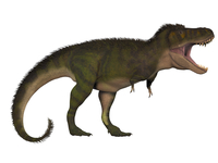 Tyranosaurus Rex, a large carnivore of the Cretaceous Period.