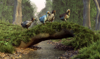 A group of Dodo birds crossing a natural bridge over a stream.