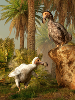 A pair of Dodo birds play a game of hide-and-seek.