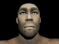 Portrait of a male Homo Erectus.