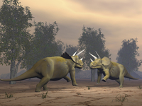 Confrontation between two Triceratops.
