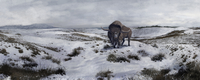 A Bison latifrons in a winter landscape during the Pleistocene epoch.