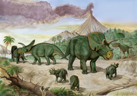 An Albertosaurus observes a family of Arrhinoceratops.