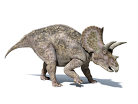 3D rendering of a Triceratops dinosaur.