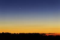 Comet Panstarrs at twilight,  Buenos Aires, Argentina.