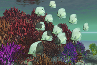 A school of butterflyfish swim over colorful coral.