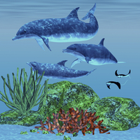 Three dolphins swim around a reef area looking for fish to eat.
