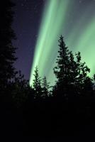 Aurora borealis above the trees, Northwest Territories, Canada.