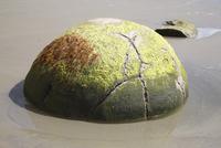 Moeraki Boulder, Koekohe Beach, New Zealand. 11079025196| 写真素材・ストックフォト・画像・イラスト素材|アマナイメージズ