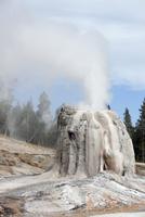 Lone Star Geyser erupting, Third Geyser Basin geothermal area, Yellowstone National Park, Wyoming.