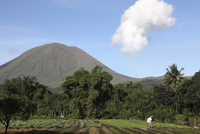 Agriculture near Kinilow town at foot of Lokon-Empung volcano, Indonesia.